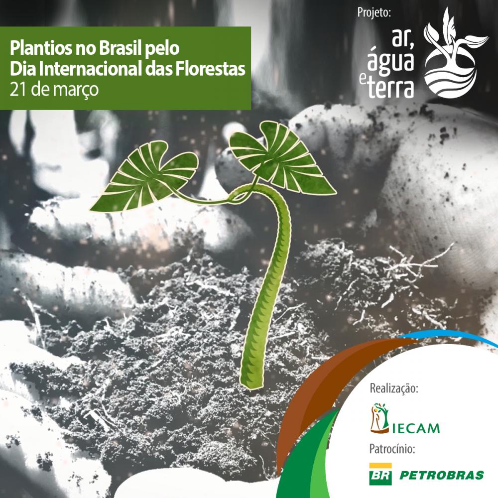 Plantios no Brasil pelo Dia Internacional das Florestas