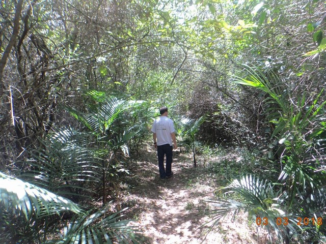 Dia Mundial das Florestas