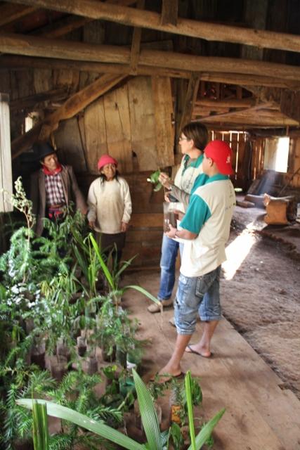 Projeto recebe doações de sementes e mudas