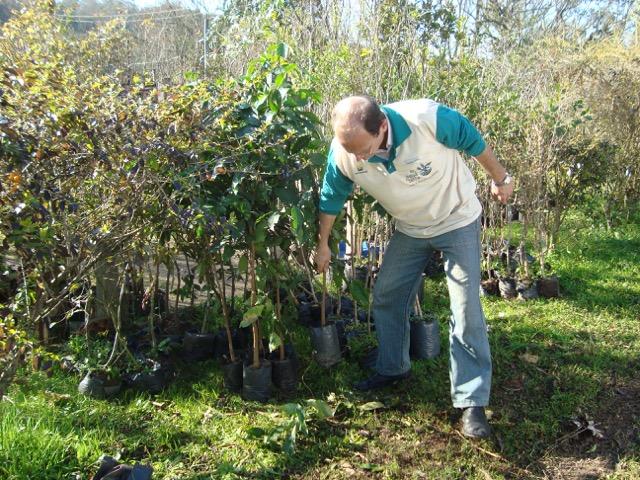 Granja Vargas e Lomba do Pinheiro recebem doações de mudas