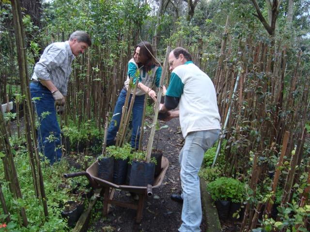 Cachoeirinha doa mudas para aldeias guarani