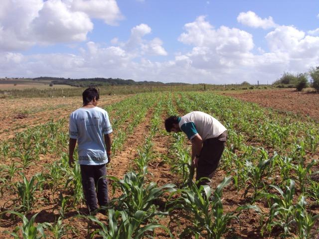 Ações desenvolvidas na aldeia Estiva mostram resultados positivos