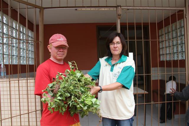 Aldeia Itapoty doa mudas de batata doce