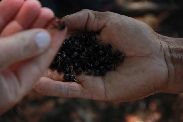 IECAM realiza pesquisa etnobotânica em Nhuu Porã