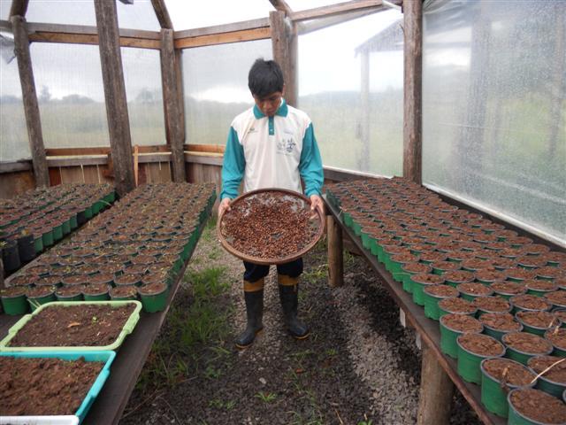 Pitangueiras e tarumã são transplantadas em Nhuu Porã