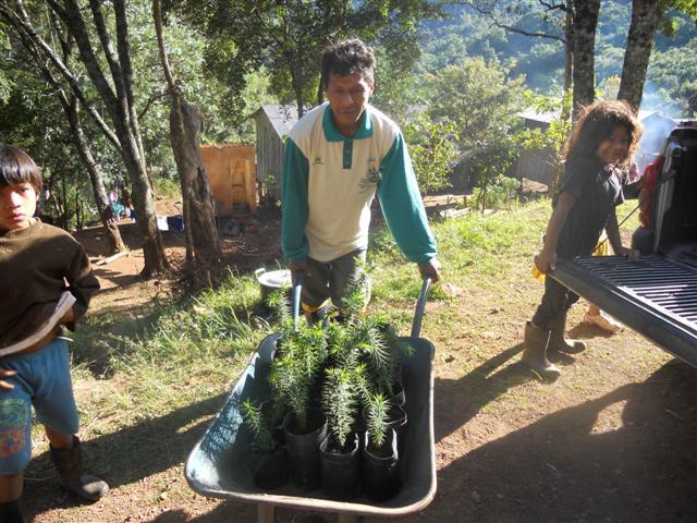 Intensificado cultivo nas aldeias guarani