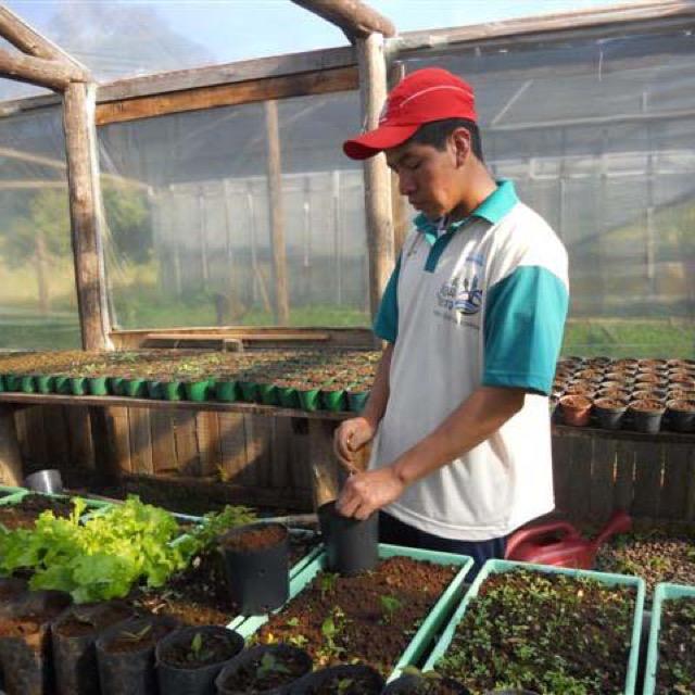 Aldeias do projeto recebem 3400 mudas para plantio