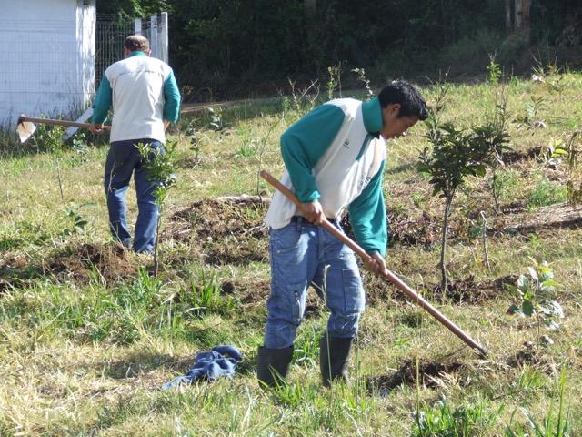 Projeto promove mutirão em aldeia guarani