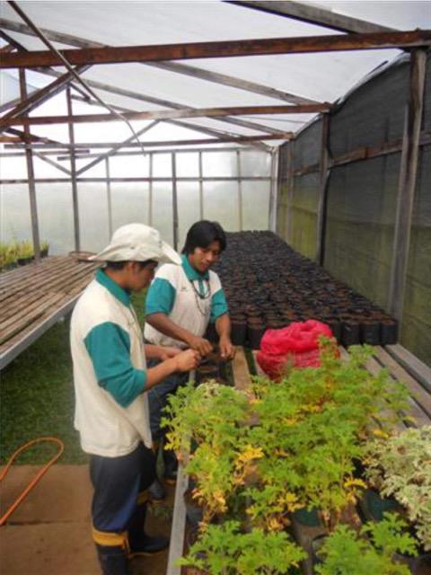 Ações de recuperação e conservação ambiental em Aldeias Guarani do RS