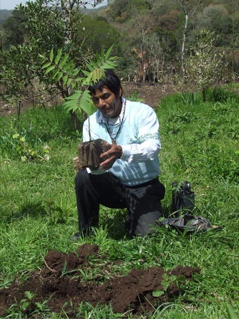 13.487 mudas nativas plantadas já foram plantadas
