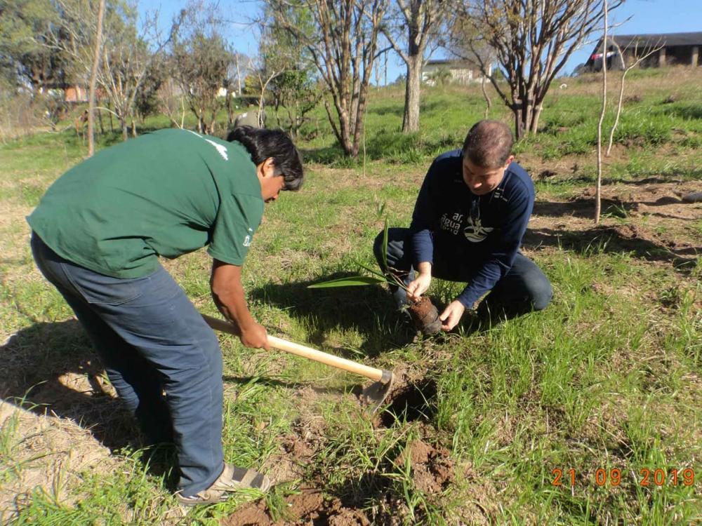 Plantio pelo Dia da Árvore